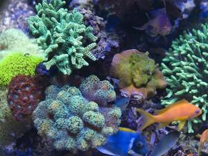 Jūrinis akvariumas