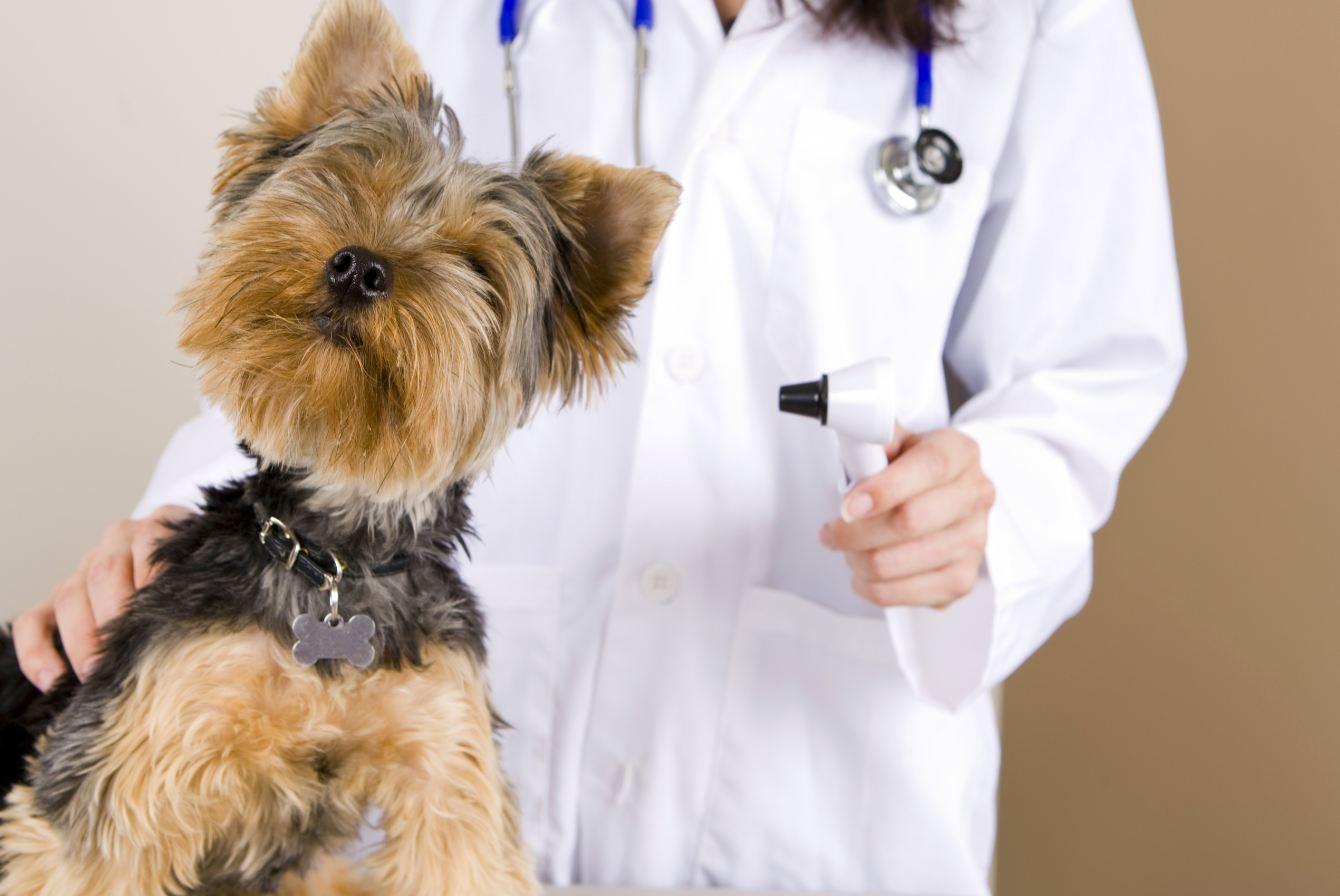 Vaistai veterinarams