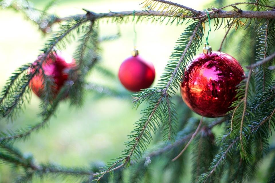 Gyvos Kalėdinės eglutės internetu – įsigykite gražuoles būdami namuose